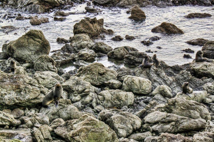 Seals Kaikoura NZ William Woodward