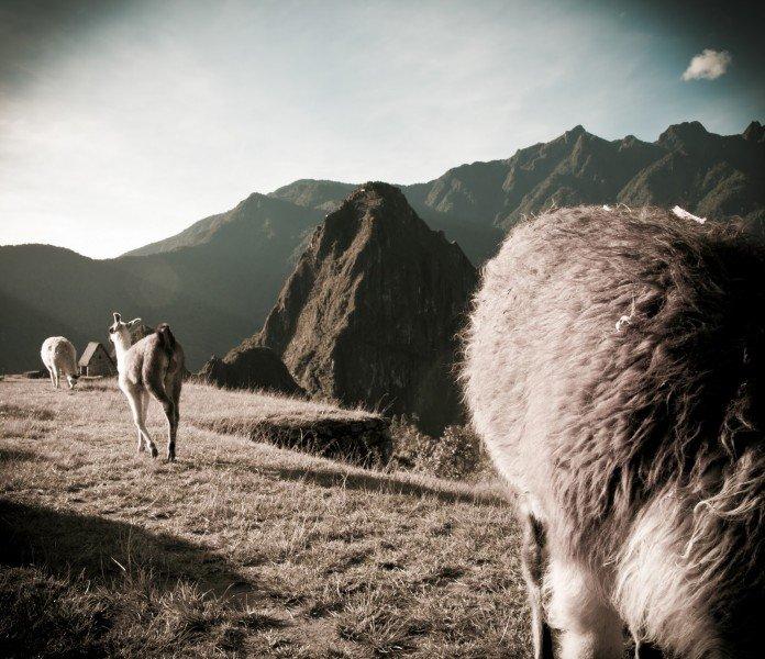 Mountain Machu Picchu William Woodward