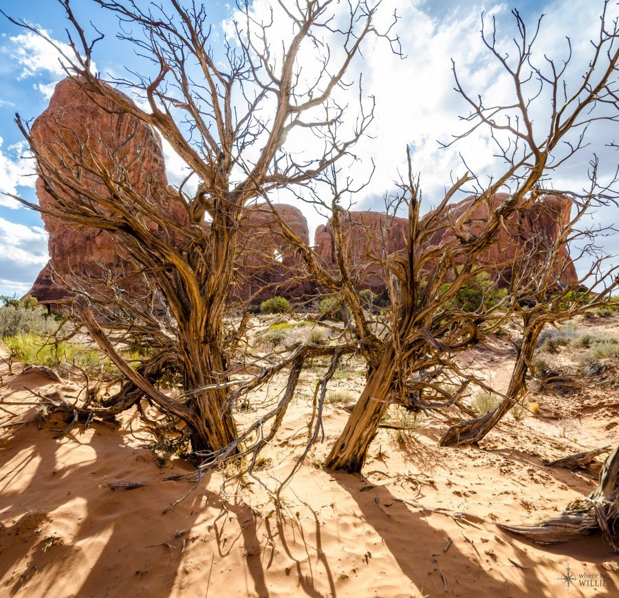Chaos Arches National Park William Woodward