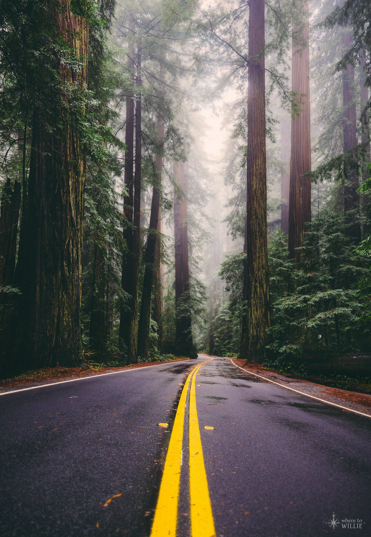 follow me home avenue of the giants redwoods national park california where to willie. Black Bedroom Furniture Sets. Home Design Ideas